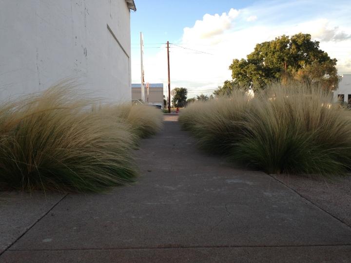 Marfa Grass 2 - Maleeha Sambur.jpg