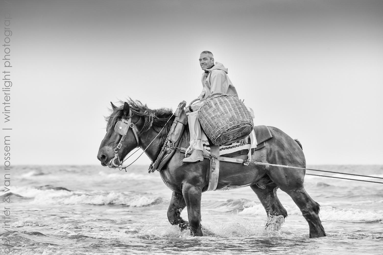 Shrimp Fishing on Horseback - Garnaalvissers Te Paard 3
