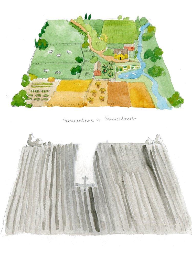 permaculture artwork