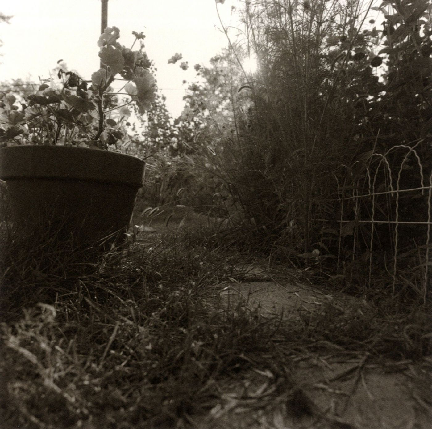 Hashtag Throwback Thursday. Here is a photograph of the backyard of 7 Dorris Avenue on the east side of Buffalo, New York. It doesn't look like much. This was the tiny patch that was my grandmother's backyard. When I was little she would pull out a wooden sandbox with a little colored canvas roof and set it there so I could climb in to play. She'd give me a bucket of water so that I could make rivers and lakes. She hung laundry on the line that blew in the breeze like ghosts. I have a photograph of my grandfather standing in that backyard. He is with my mother when she was a little girl. He died when she was five. In the photograph, I can see the laundry line pole and I can see the little wire fence. There is no sandbox. There is a little terrier I never knew. I look into the eyes of my mother as a child and see her as an adult. I look at the plants in the photograph. Scrutinize them.  One summer I hacked away the overgrowth in her backyard and came to a cluster of hyacinth. They were planted from Easter gifts from the past and all at once, below the overgrowth from the scrub trees and shrubs, there they were again. Off-handedly, she told me the date she planted them, cut some flowers and brought them inside. The wood of the sandbox rotted away. My grandmother and mother are just photographs now. The house still stands, last one nearest the corner now after a fire took the neighboring one. I like to imagine the hyacinth she planted has taken over and blooms in purples and whites. It is the fragrance of the hyacinth that brings me back to her. There she is again with the scissors cutting the stems at an angle. The heavy flower heads bending the weak stalk. There is my mother again. There is the sandbox with its river of tap water. There is the colored canvas and the sheets blowing on the line. The photograph is the silent reminder. I want to be able to hear her Polish accent in it, I want to hear her swear when she drops a wooden clothesline and takes another from her pocket. I want to hear the sound of the shovel in the sand, hear the water carve away the river. I want to see the hyacinth in the glass on the kitchen table, the room a perfume. I go back there. To the glass on the table. I stand at the sink and look out the window to the backyard, to the wire fence, to that summer's overgrowth and everything I carry within.