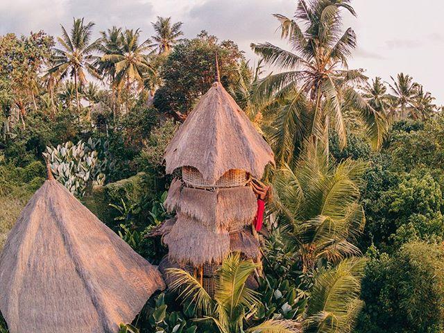 Trying to not crash my drone in Bali again and hii from the firefly treehouse 🌴 . . . . . . #bali #treehouse #ubud #balilife #balibible #aroundtheworld #lensbible #passionpassport #visualsofearth #travelstoke #portraiture #theimaged #worldcaptures #canon #exploretocreate #adventureculture #beautifuldestinations #earthofficial #letsgosomewhere #wonderfulglobe #portraitmood  #visitbali #girlswhotravel #balidaily #lifeofadventure #roamtheplanet #createcommune #moodyports #portraitvision
