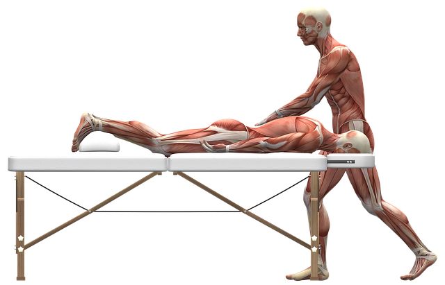 massage-therapy-2277454_640.png