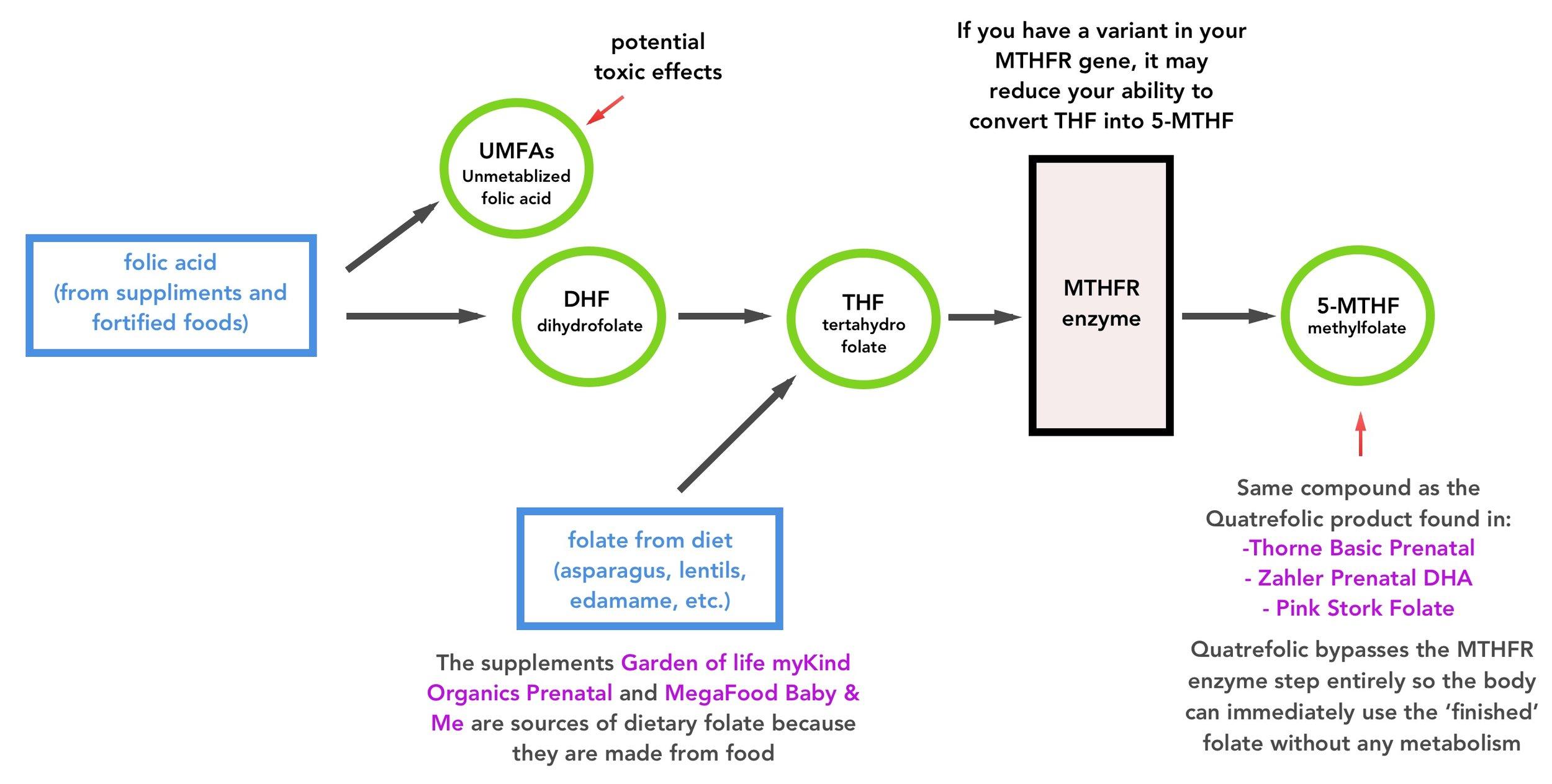 Folic acid metabolism to 5-MTHF methylfolate and MTHFR genetic variants