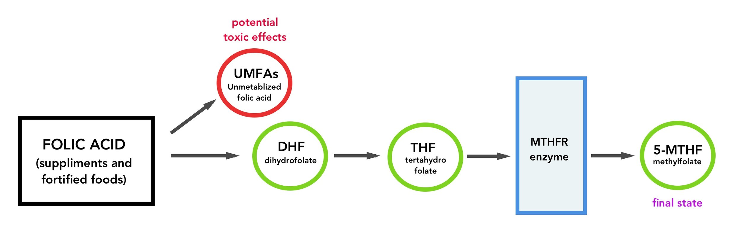UMFAs folic acid pathway