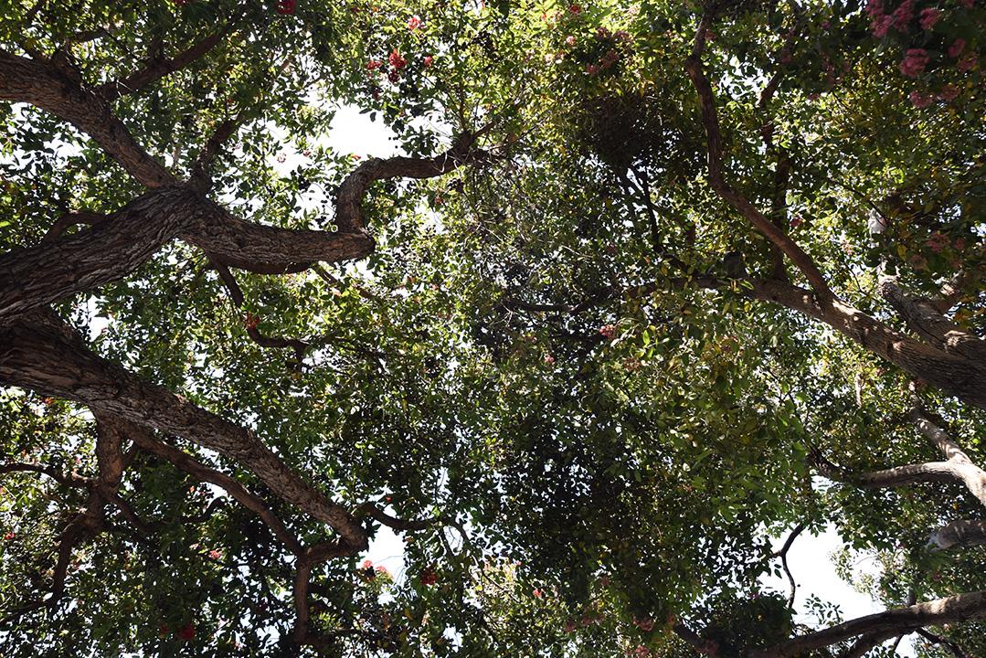 TreeAmour_No22_streettree1sm.jpg