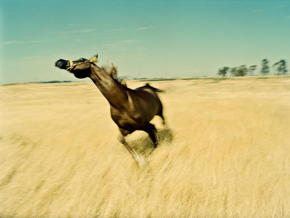 Giselle+Horse+1.jpg