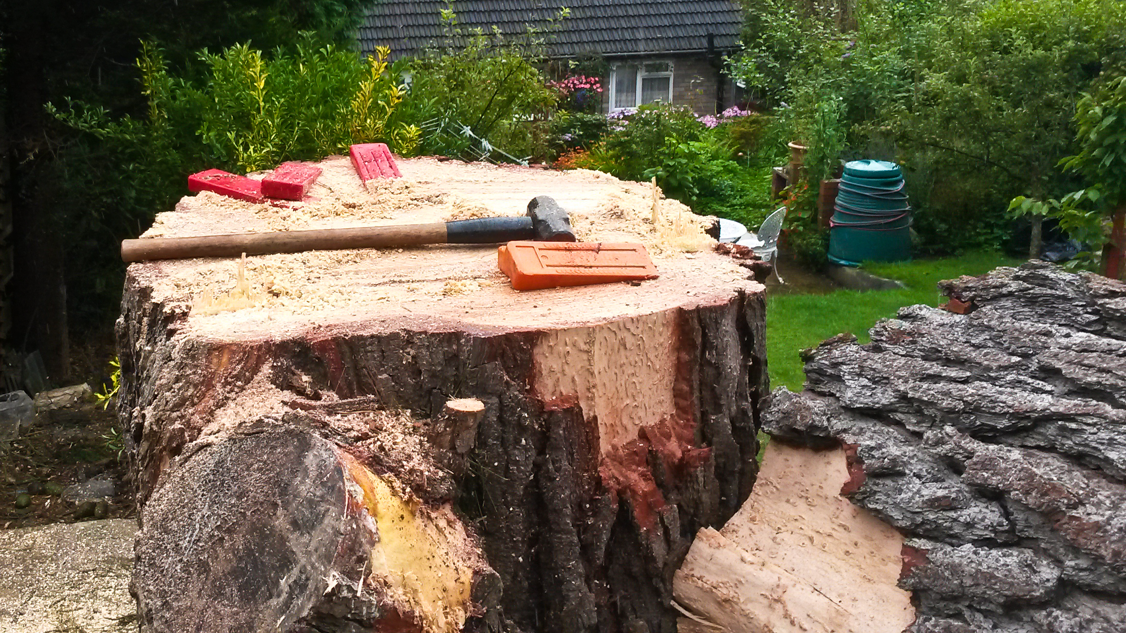 Wedges are used to aid felling of the main stem