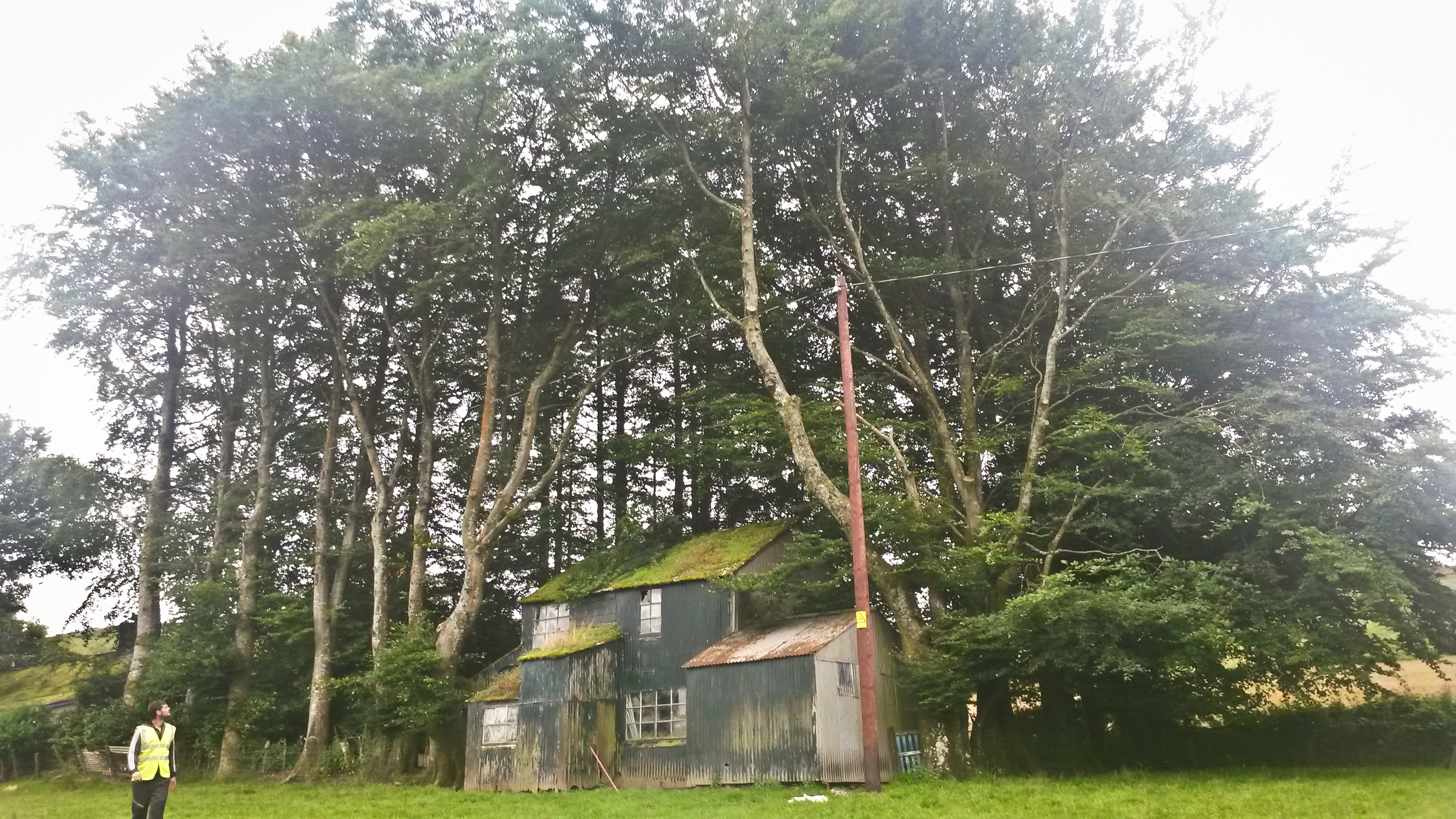 BEFORE: Beginning of day 1, approximately 25 mature trees to be removed to allow for the renovation of this grade 2 listed carpenters workshop