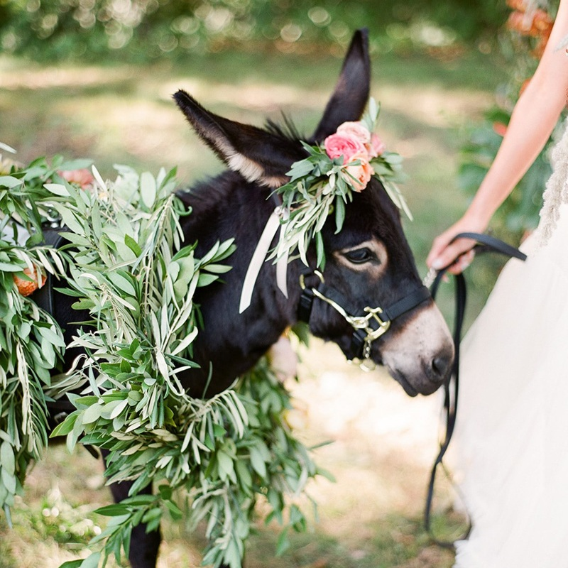 Charlotte's Shenanigans - MEET THE BEVERAGE BURRO >>