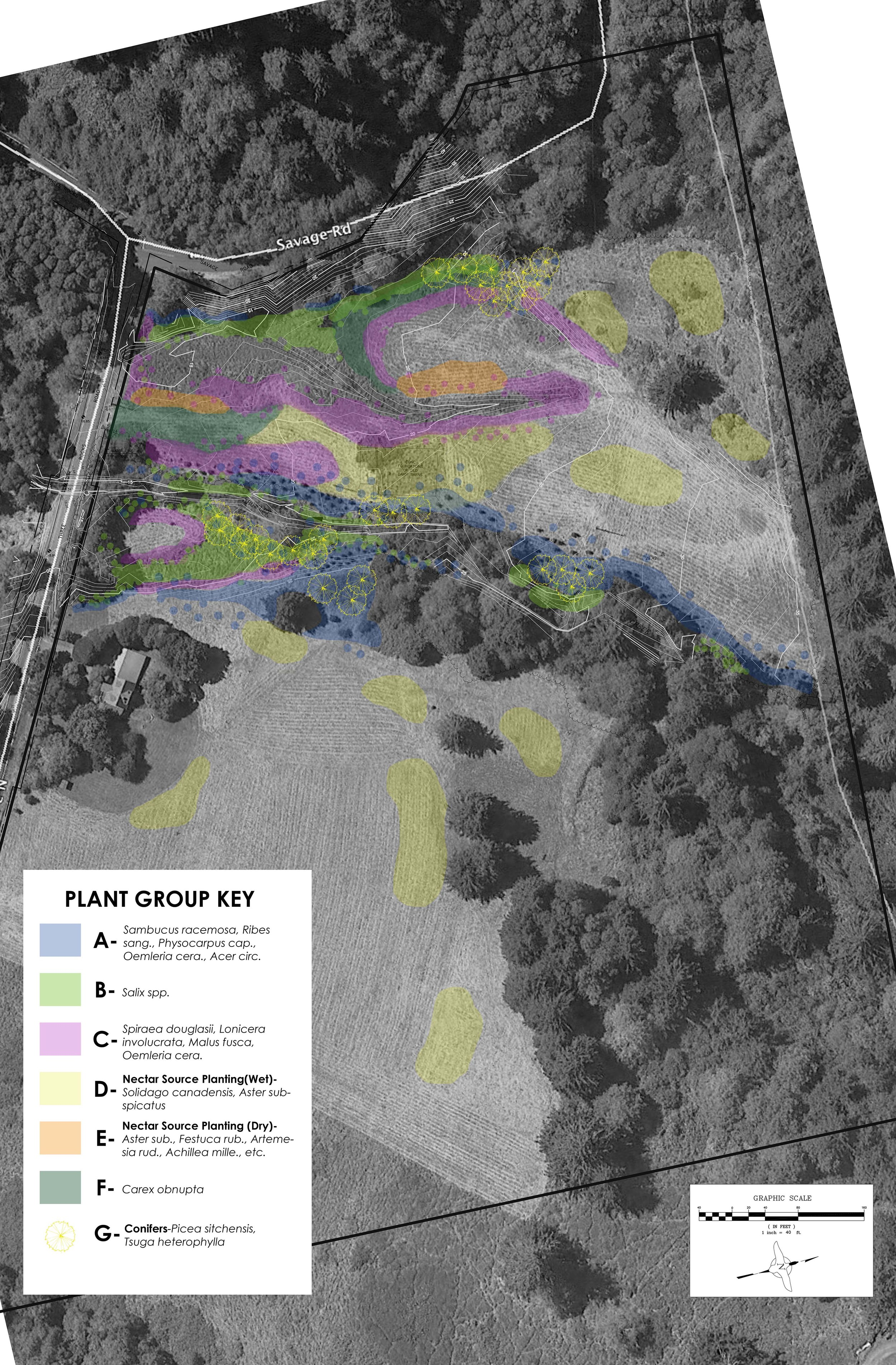 McKee Meadow-PLANTS.jpg