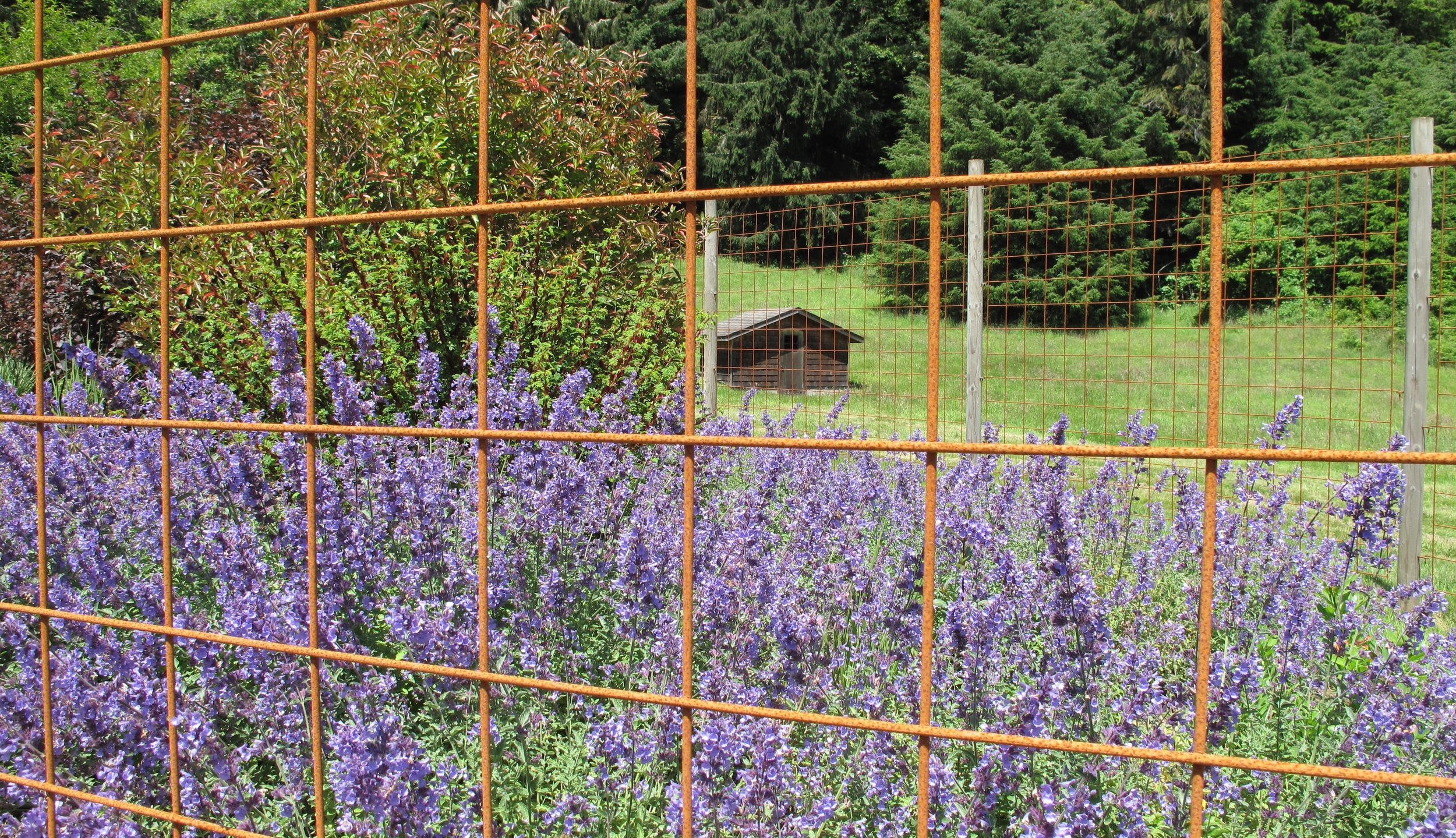 Non-galvanized Steel Fencing  for elk protection