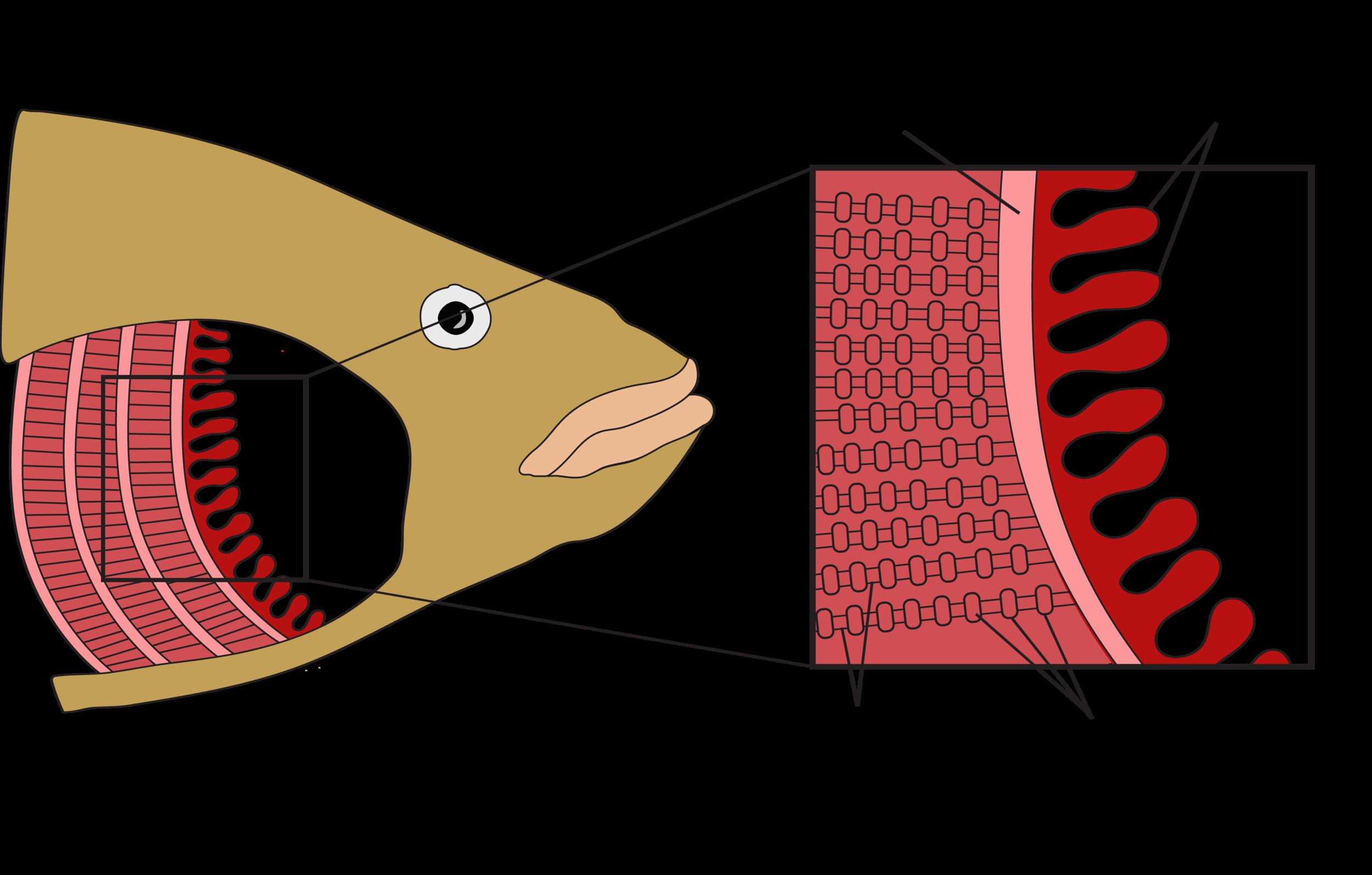 Figure 6.12.png