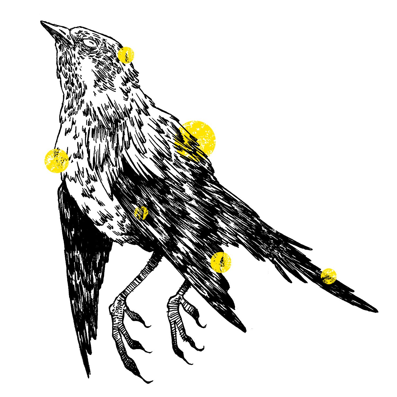 20-bird.jpg
