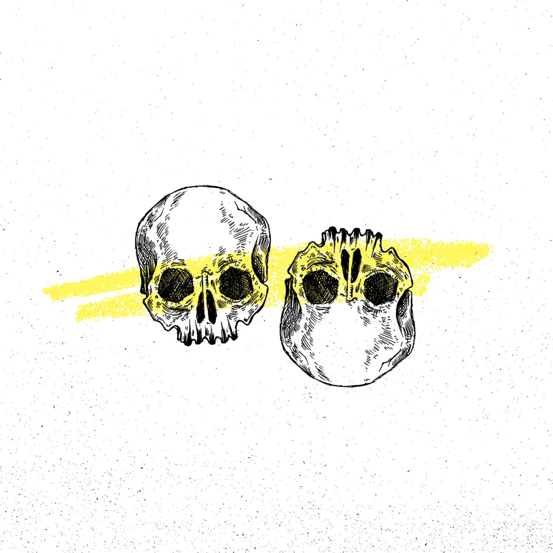-skull-1.jpg