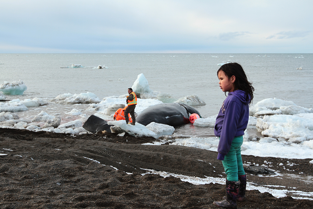Crew members struggle to pull a whale ashore after it's tail bone has snapped.