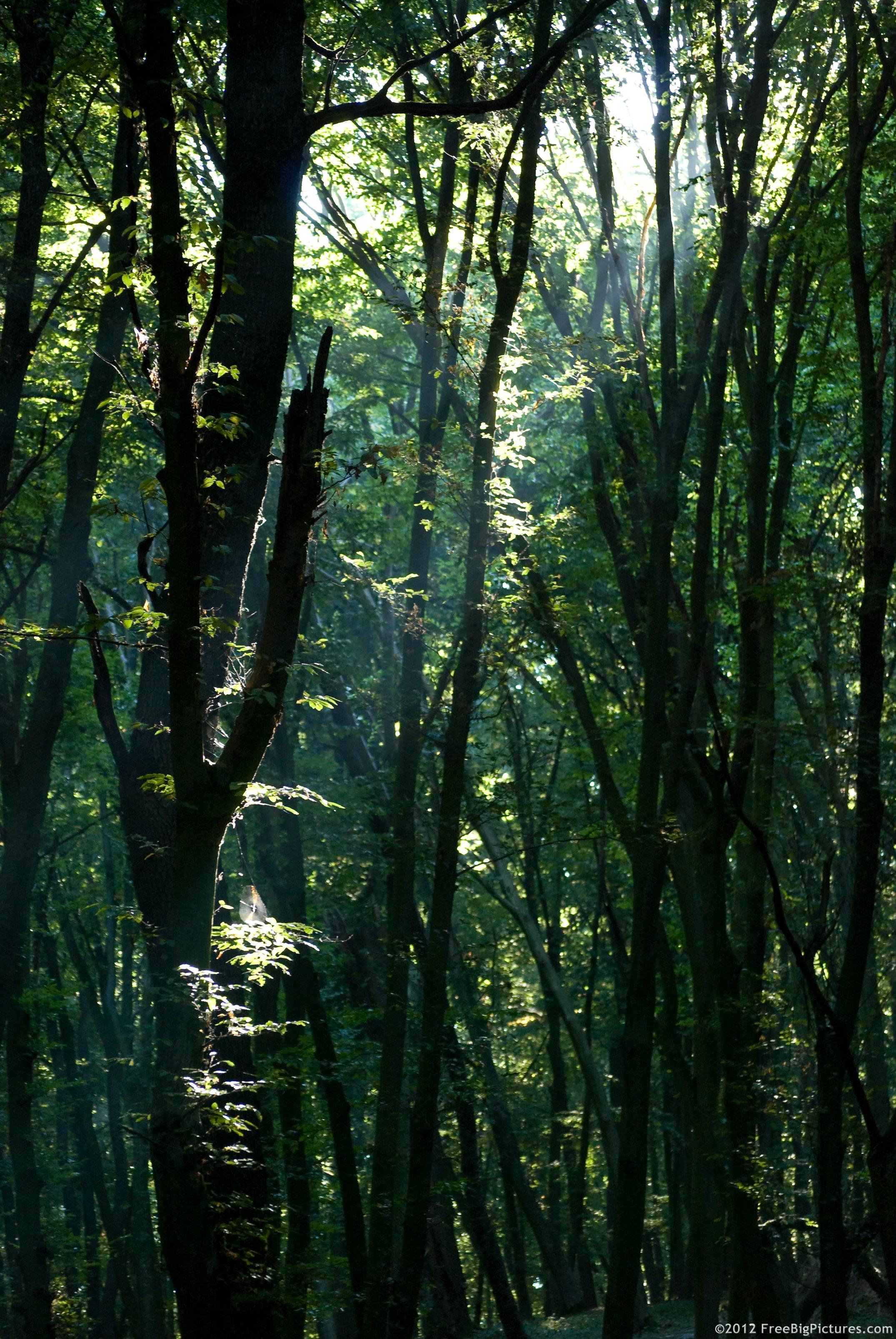 forest-sunlight.jpg