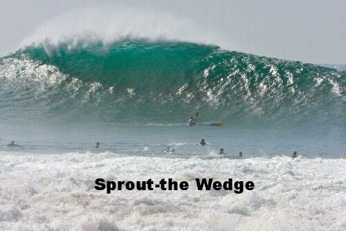sproutwave.jpg