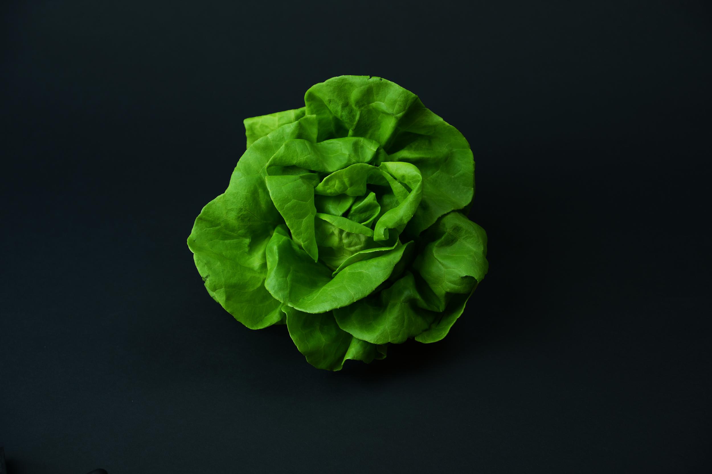 Suncrest™ Bibb Lettuce