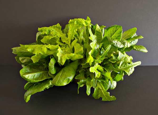 A tasty bouquet of Suncrest™ lettuces.