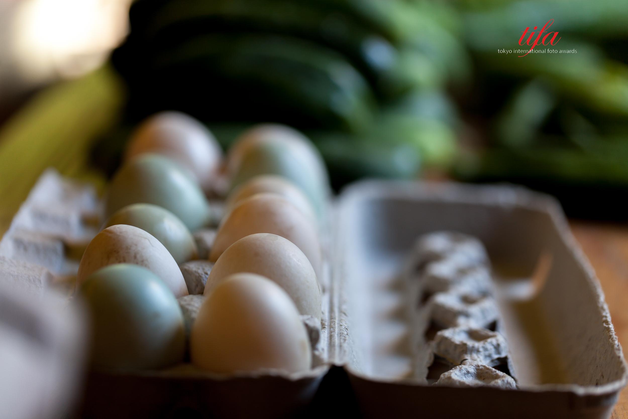 Eggs, Springdale Farms, Austin, TX