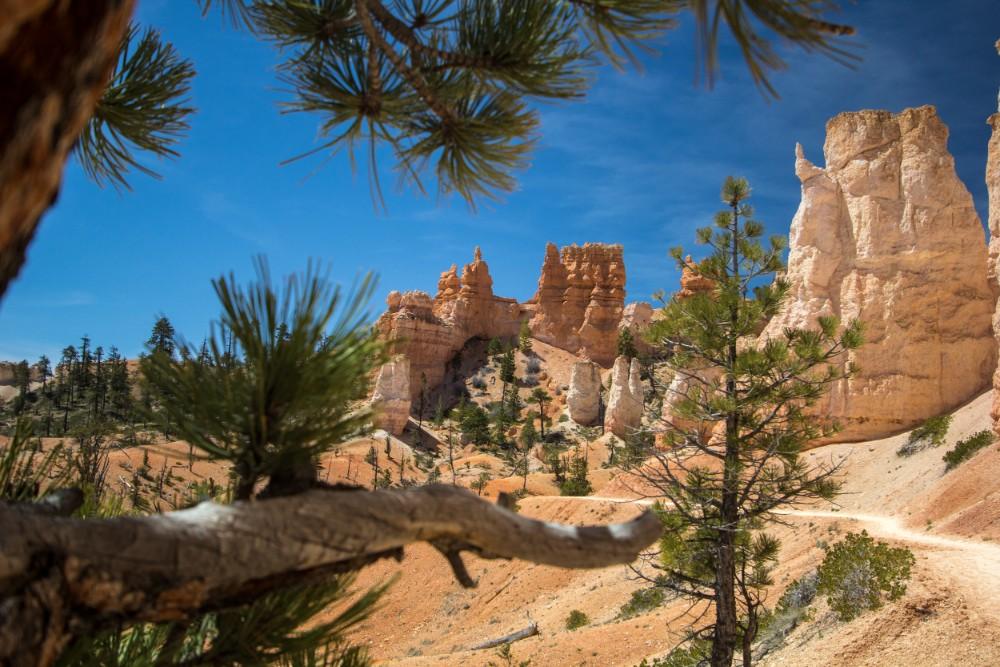 Desert-Trip-6149.jpg