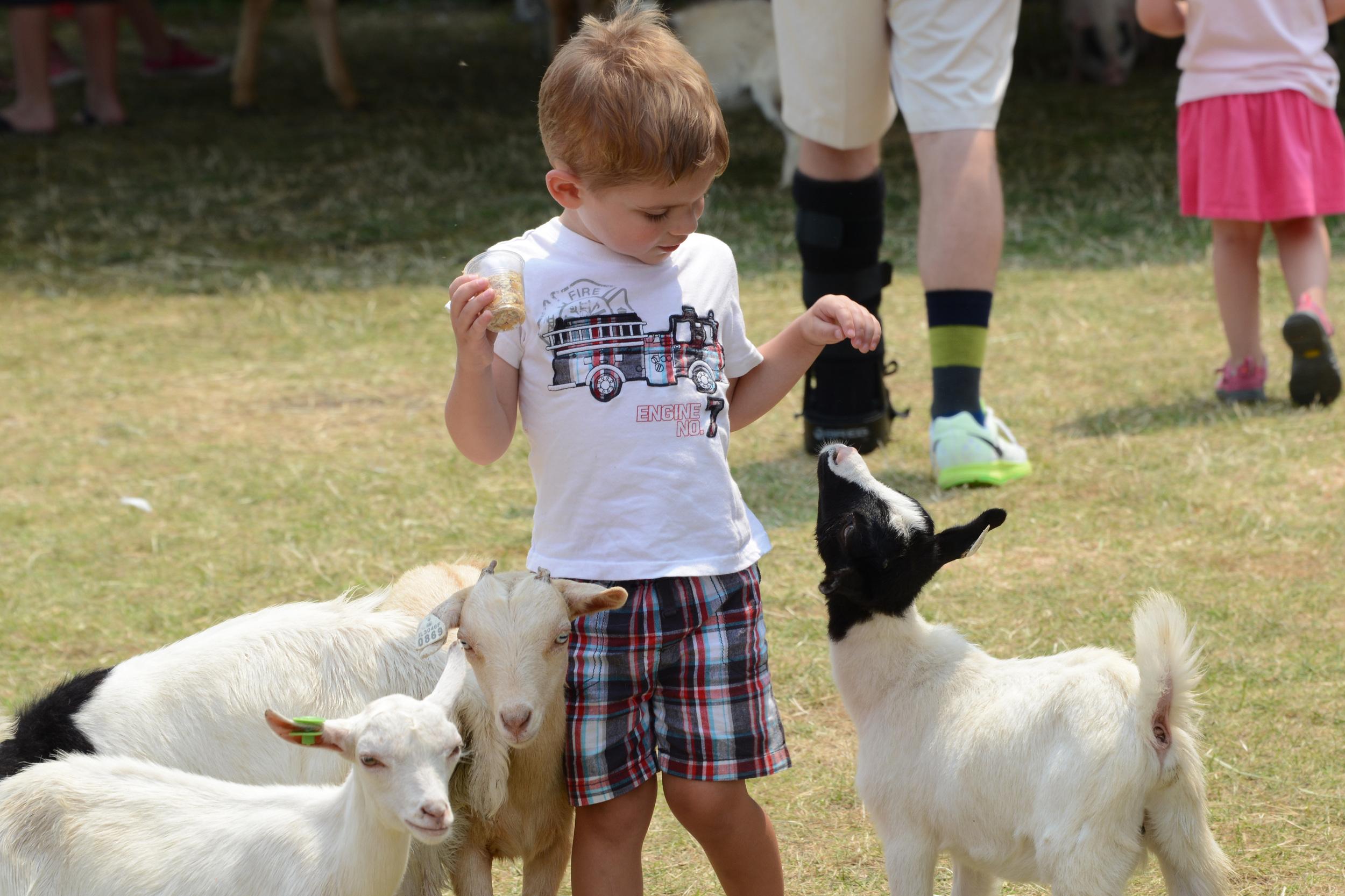 RF2015 Petting Zoo-011.jpg