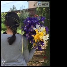 assorted iris