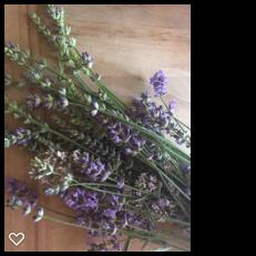 english lavenders