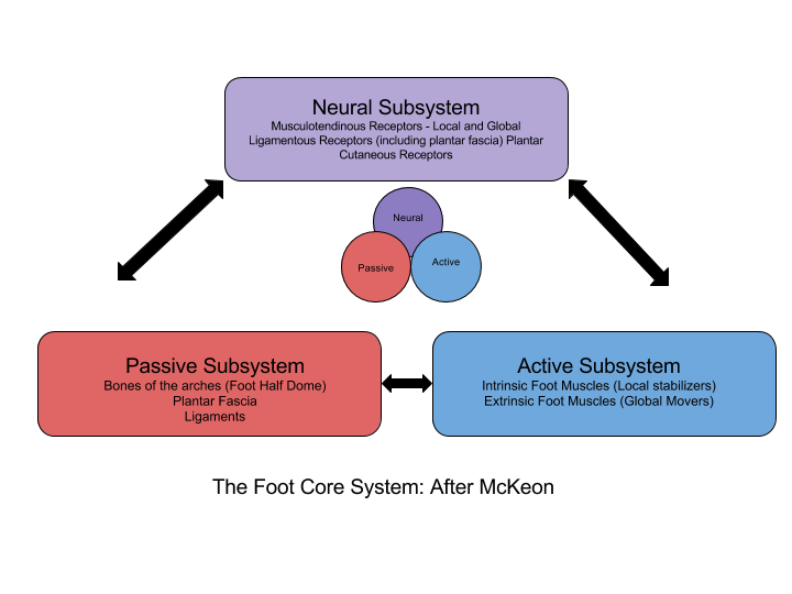 """The foot core system. The neural, active and passive subsystems interact to produce the foot core system which provides stability and flexibility to cope with changing foot demands."" (McKeon 2015)"