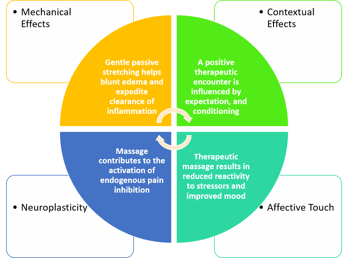 Proposed Mechanism of Action for Massage Therapy.