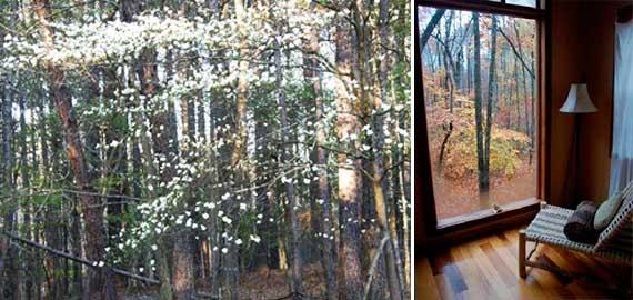 dogwood_window.jpg