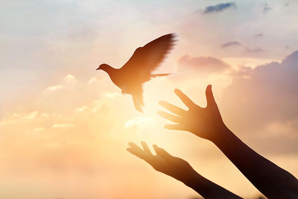 bird-let-go-as145584909.jpg