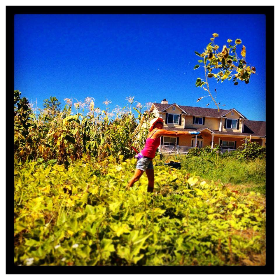 Mom saving summer at Greyback Farm