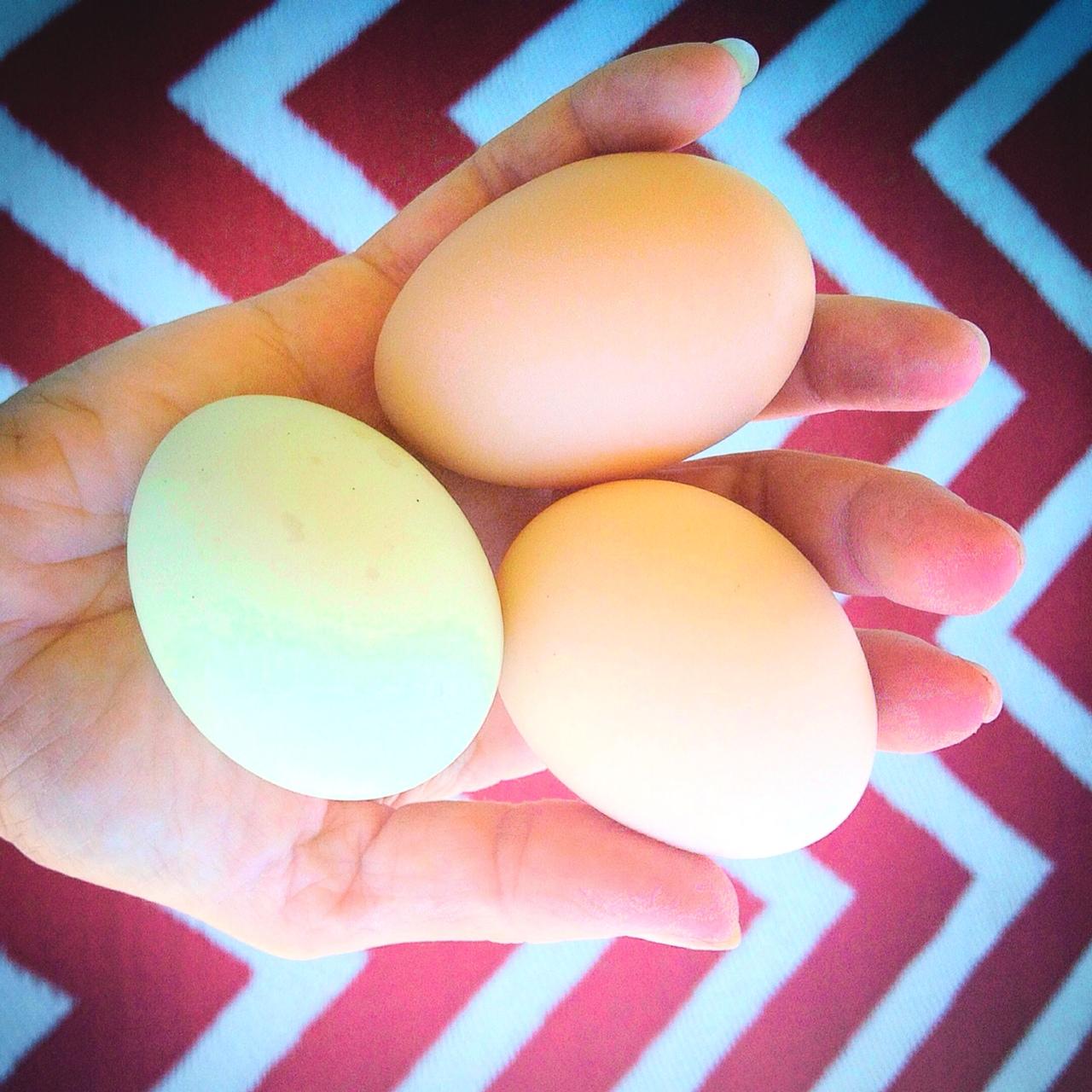 Pastured-Rogue-Eggs.JPG