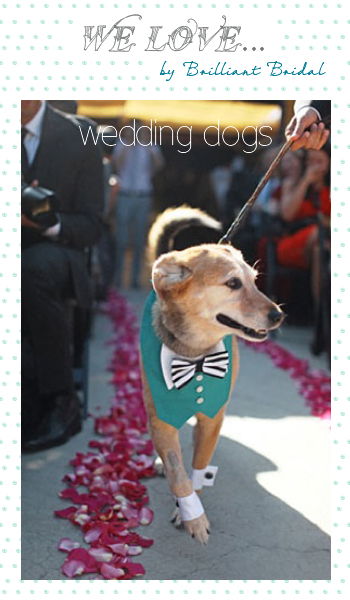 11-8-wedding-dogs.jpg
