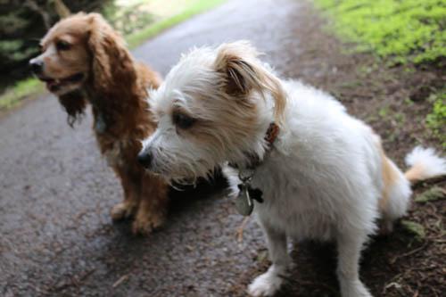 Pups at the Park