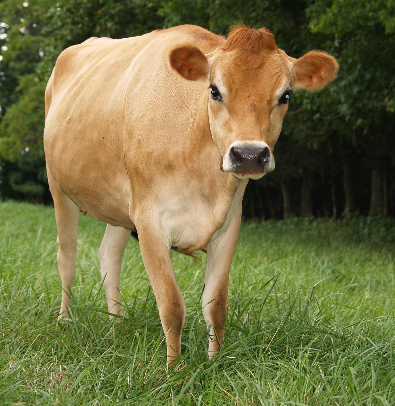 knb jersey farm raw milk tennessee