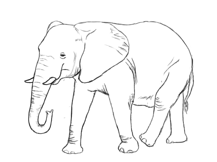 Is there an elephant in the room?