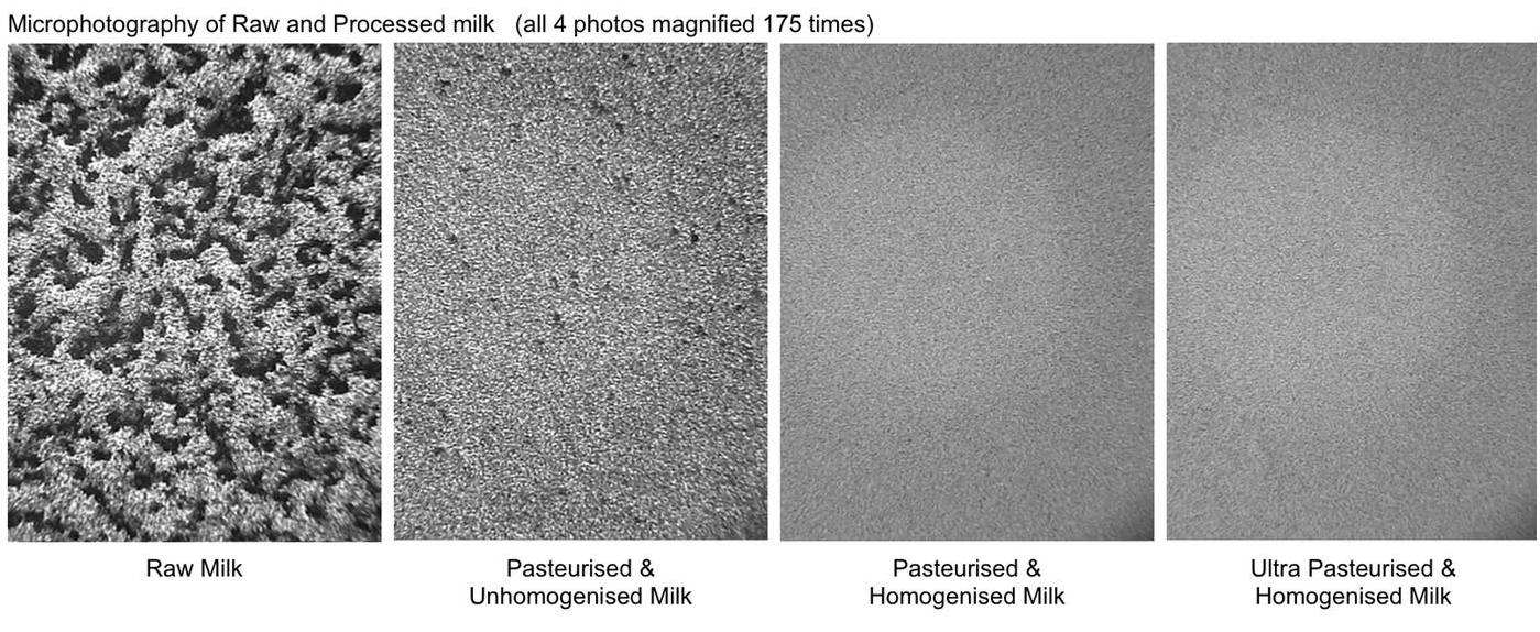 Photo:   Microphotography of raw milk and processed milk. These pictures show the visible evidence of raw milk before and after it was processed. Click on image to enlarge.  source
