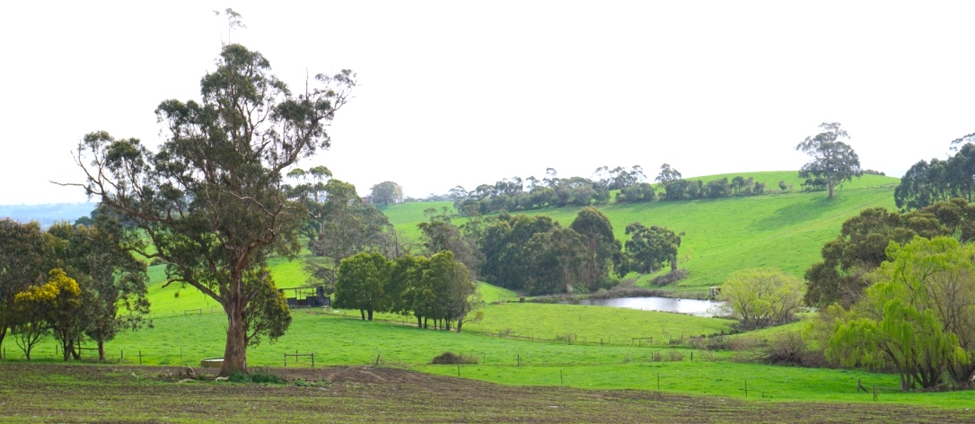 Photo:   a farm in Gippsland. We have the pastures and the dairy farmers to produce raw milk for human consumption.