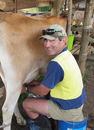 Image:   Rowen milking a Jersey cow