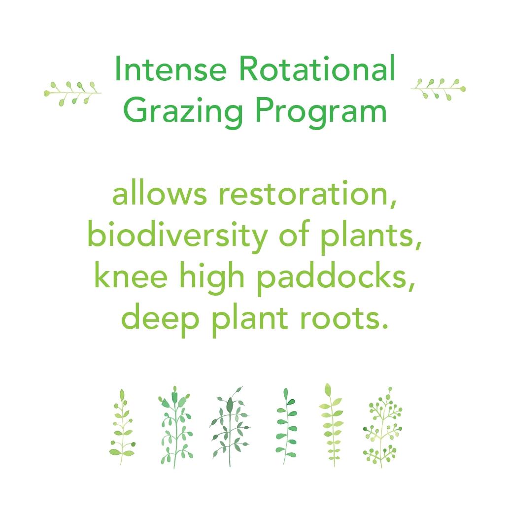 Intense Rotational Grazing Program 2.jpg