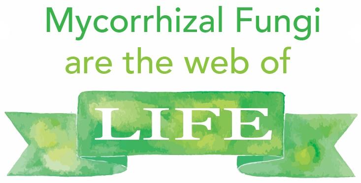 Mycorrhizal fungi raw milk soil systems