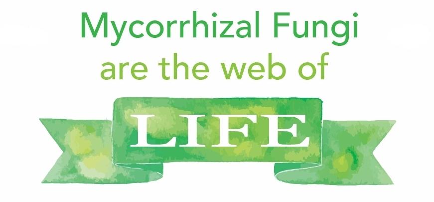 Mycorrhizal fungi .jpg