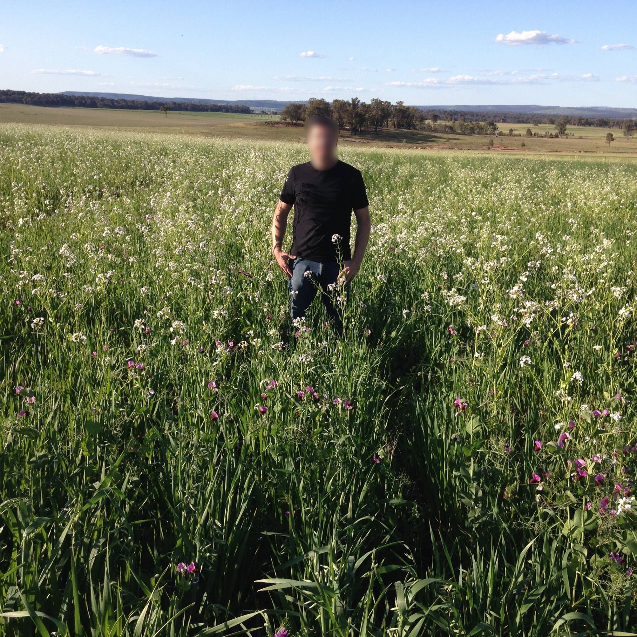 Image:   This photo was taken on Australian farmer Colin Seis' farm at Winona of his Multi Species Pasture Crops, click to enlarge.