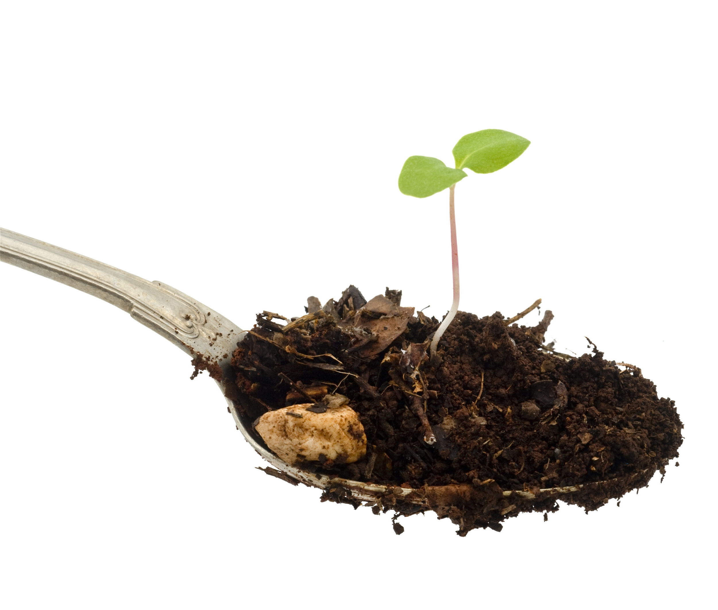 Image:   one teaspoon of soil contains more microbes than there are people on earth.