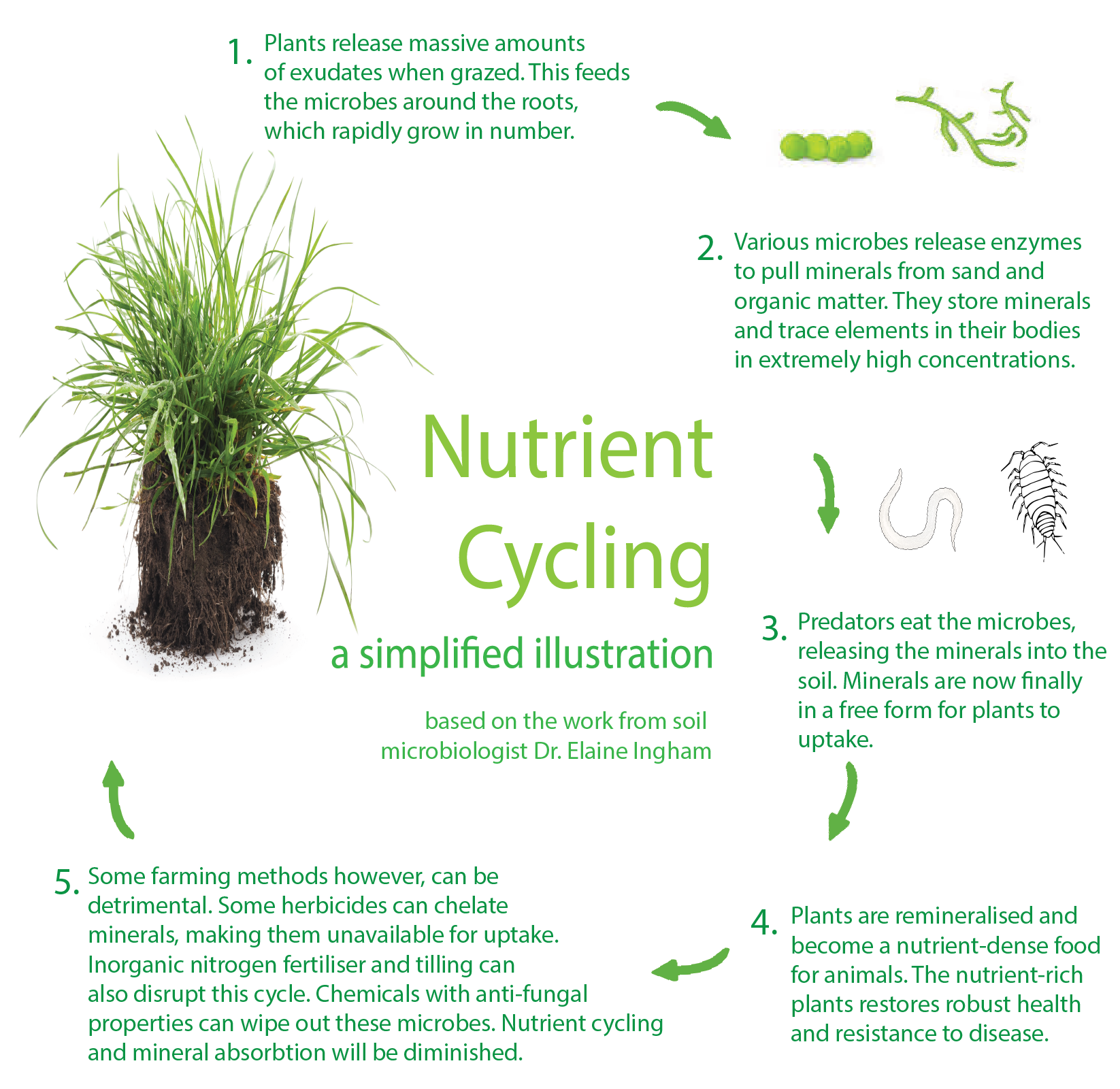 Nutrient Cycling SQUARE fix.png