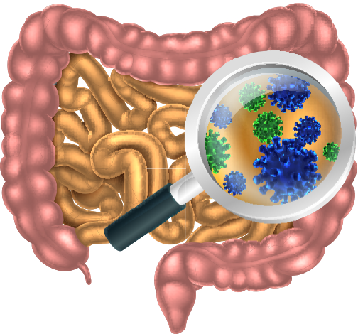 AdobeStock_95614915 gut microbes.jpg