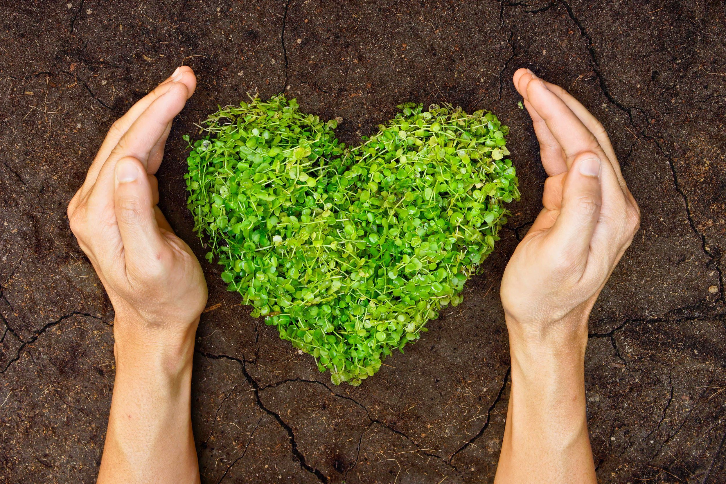 AdobeStock_61148453 green heart.jpg