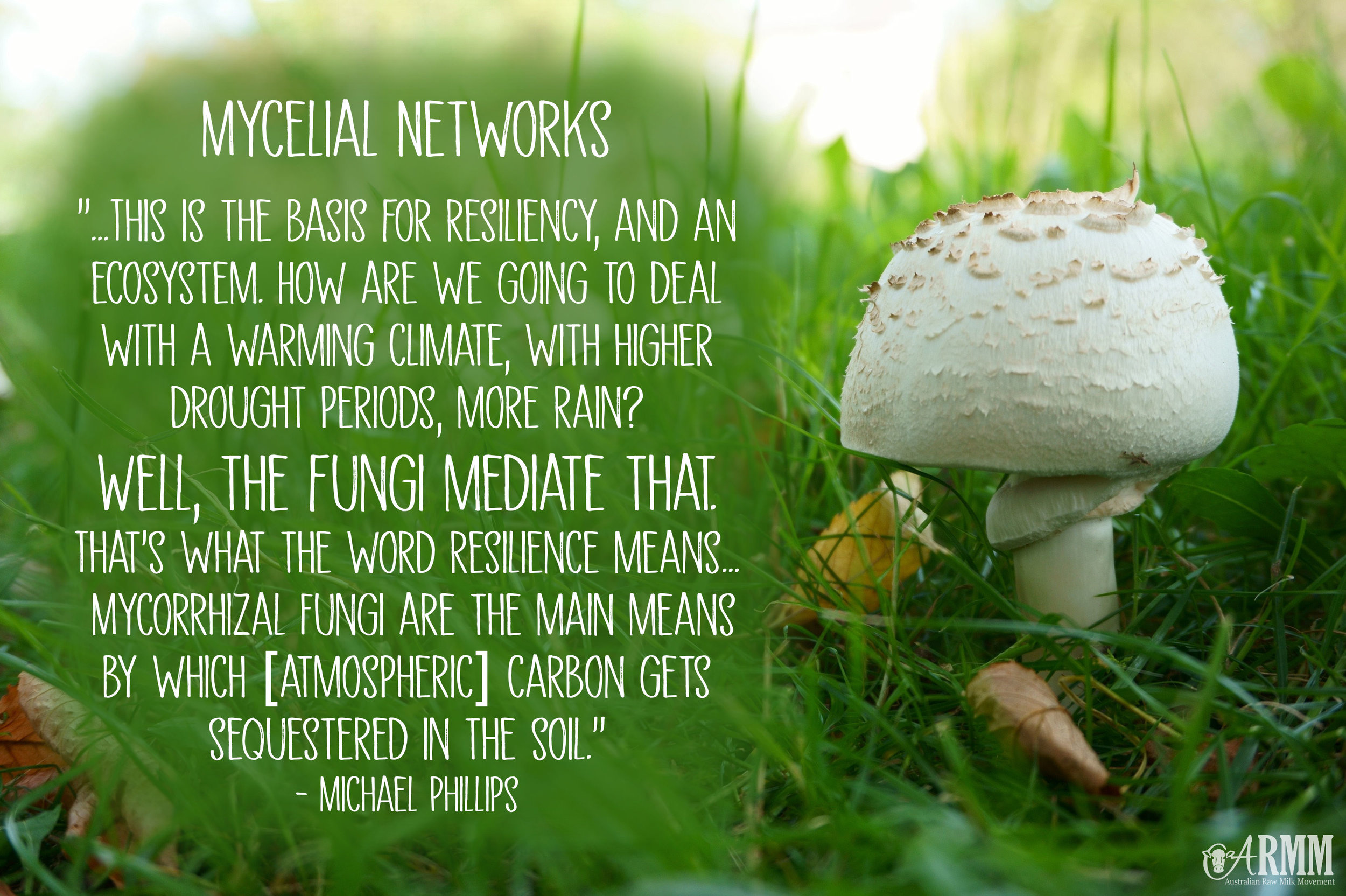 mycelial networks mycorrhizal fungi regenerative farming sequester carbon